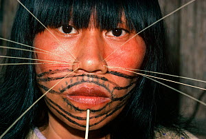 Red and black paint covers a Matses woman's face, and she wears decorative spines on both sides of her nose. This makeup represents the whiskers of the jaguar spirit. Amazon, Peru, November 2005. - Jeff Rotman