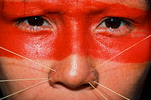 Red paint covers the top half of a Matses woman's face, and she wears decorative spines on both sides of her nose. This makeup represents the whiskers of the jaguar spirit. Amazon, Peru, November 2005... - Jeff Rotman