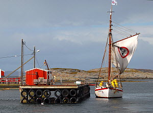 1901 Colin Archer rescue boat 'Stavanger' preparing to sail out of Sor-Gjslingan. Vikna archipelago, Norway, May 2009.  -  Nic Compton