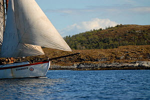 1901 Colin Archer rescue boat 'Stavanger' sailing off Rorvik in the Vikna archipelago, Norway, May 2009.  -  Nic Compton