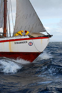Sail work on board 1901 Colin Archer rescue boat 'Stavanger' in the Vikna archipelago, Norway, May 2009.  -  Nic Compton