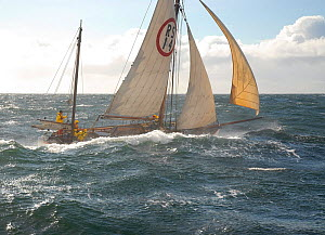 1901 Colin Archer rescue boat 'Stavanger' in heavy seas off Sor-Gjslingan in the Vikna archipelago, Norway, May 2009.  -  Nic Compton