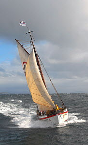 1901 Colin Archer rescue boat 'Stavanger' sailing in the Vikna archipelago, Norway, May 2009.  -  Nic Compton