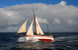 1901 Colin Archer rescue boat 'Stavanger' sailing off Sor-Gjslingan in the Vikna archipelago, Norway, May 2009.  -  Nic Compton
