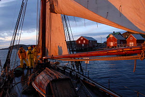 1901 Colin Archer rescue boat 'Stavanger' approaching Sor-Gjslingan in the Vikna archipelago, Norway, May 2009.  -  Nic Compton