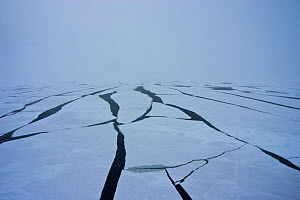 Sea ice forming in the Bering Sea, Alaska, USA, in March 2008. Taken on location for the BBC series, Frozen Planet.  -  Jeff Wilson