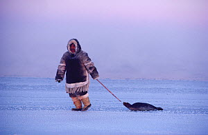 Inuit hunter dragging Seal at the floe edge. Igloolik, Nunavut, Canada, 1990. 40 BELOW bookplate. - Bryan and Cherry Alexander