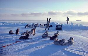Inuit hunter doing handstand on sea ice to celebrate successful hunt. Northwest Greenland, 1980. 40 BELOW bookplate.  -  Bryan and Cherry Alexander