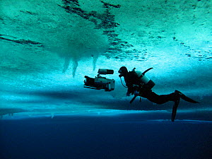 Cameraman, Didier Noirot, filming the formation of 'brinicles' (brine icicles or ice stalactites) under the ice, McMurdo Sound, Antarctica, during the filming of 'Winter' for the BBC Frozen Planet ser...  -  Chadden Hunter