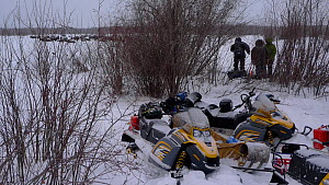 BBC filming team used the willow scrub as a blind, using sign language so as not to spook either Bison (Bison bison) or Timber wolves (Canis lupus) they were trying to film.  The snowmobiles were aban...  -  Chadden Hunter
