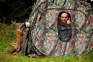 Photographer Klaus Echle looks out of camouflage tent while Red fox (Vulpes vulpes) vixen 'Sophie' examines the camera with another fox in background, Black Forest, Germany, September 2010 - Klaus Echle