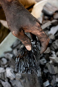 Sooty hand holding charcoal made in a burner. Black Forest, Germany, July.  -  Klaus Echle