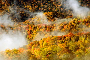 Canopy of autumn trees and rising fog viewed from Webb Overlook along the Newfound Gap Road in Great Smoky Mountains National Park, North Carolina, USA, October 2008 - Kirkendall-Spring