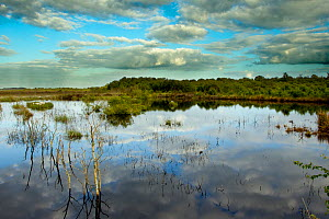 Ballynahone Bog, County Londonderry, Northern Ireland, UK, June 2011  -  Ben Hall / 2020VISION