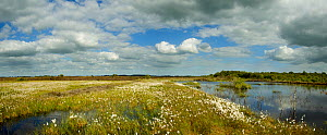 Panoramic view of Ballynahone Bog at dawn,  County Antrim, Northern Ireland, UK, June 2011  -  Ben Hall / 2020VISION