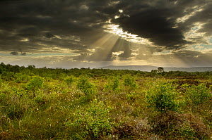Sun's rays shining through dark clouds, Ballynahone Bog, County Antrim, Northern Ireland, UK, June 2011  -  Ben Hall / 2020VISION