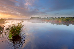 Ballynahone Bog at dawn, County Antrim, Northern Ireland, UK, June 2011  -  Ben Hall / 2020VISION