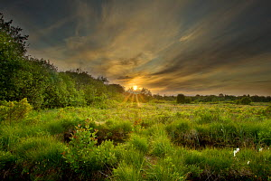 Montiagh's Moss at dusk, County Antrim, Northern Ireland, UK, June 2011. Did you know? Montiagh's Moss is one of the most important sites in Northern Ireland for wetland invertebrates and rare plants. - Ben Hall / 2020VISION