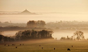 View towards Glastonbury tor from Walton Hill at dawn, Somerset Levels, Somerset, England, UK, April 2011 - Guy Edwardes / 2020VISION