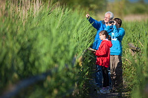 Family, man, boy and girl, birdwatching in reedbeds at Westhay SWT reserve, Somerset Levels, Somerset, England, UK, June 2011 Model released  -  Guy Edwardes / 2020VISION