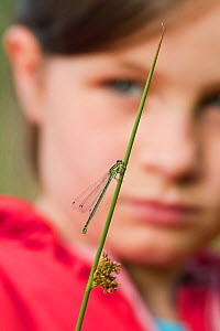 Young girl watching damselfly (Coenagrion sp) at Westhay SWT reserve, Somerset Levels, Somerset, England, UK, June 2011 Model released - Guy Edwardes / 2020VISION