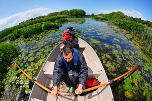 Photographer, Paul Harris, and SWT reserve manager, Mark Blake, working from a small boat at Westhay SWT reserve, Somerset Levels, Somerset, England, UK, June 2011, Model released. Photographer quote:...  -  Guy Edwardes / 2020VISION