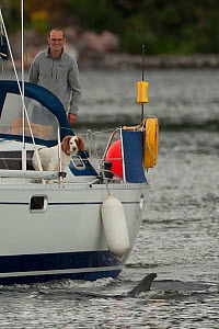 Man and dog on yacht entering Inverness Marina watching Bottlenose dolphin (Tursiops truncatus) Moray Firth, Inverness-shire, Scotland, UK, August 2011  -  John MacPherson / 2020VISION