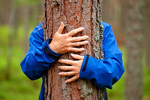 Close up of hands of woman 'hugging' Scots pine tree (Pinus sylvestris), Abernethy Forest, Cairngorms National Park, Scotland, UK, August 2010, Model released  -  Mark Hamblin / 2020VISION