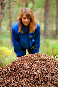 Woman aged 35-45 years looking at Wood ant's nest (Formica sp) in Abernethy Forest, Cairngorms National Park, Scotland, UK, August 2010, Model released - Mark Hamblin / 2020VISION