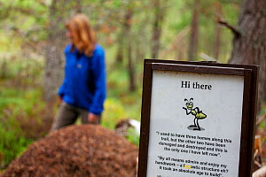 Woman aged 35-45 years walking past Wood ant's nest (Formica sp) with sign asking visitors not to damage it, Abernethy Forest, Cairngorms National Park, Scotland, UK, August 2010, Model released  -  Mark Hamblin / 2020VISION