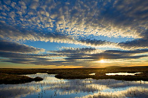 Pool system on peat bog at dawn, Forsinard Flows RSPB reserve, Flow Country, Sutherland, Scotland, UK, June 2011. Did you know? The Flow Country is a huge expanse of blanket bog which may look like a...  -  Mark Hamblin / 2020VISION