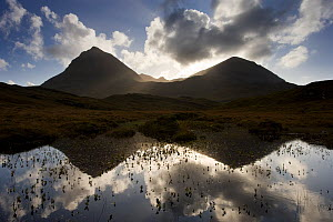 Quinag (Sail Ghorm and Sail Gharbh) and moorland pool, Assynt, Sutherland, NW Scotland, UK, October. Did you know? These wild mountains in Sutherland are home to wildcats and golden eagles but also pr...  -  Mark Hamblin / 2020VISION
