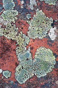 Close up of lichen covered rock, Coigach and Assynt, Sutherland, Scotland, UK, June  -  Niall Benvie / 2020VISION