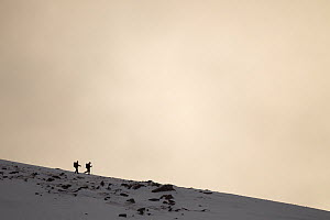 Two hikers in winter landscape at dusk, Cairngorm Mountains, Cairngorms NP, Highland, Scotland, UK, February 2011  -  Peter Cairns / 2020VISION