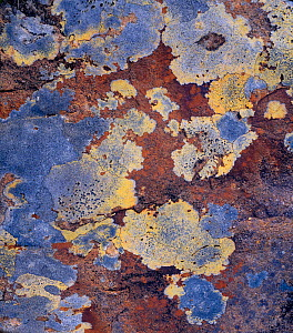 Lichen and rock detail, Coigach / Assynt SWT, Sutherland, Highlands, Scotland, UK, June - Joe Cornish / 2020VISION