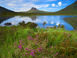 Pool and Stac Pollaidh, Coigach / Assynt SWT, Sutherland, Highlands, Scotland, UK, June 2011. Did you know? The peak of Stac Polliadh is very severely weathered and it is thought that during the last...  -  Joe Cornish / 2020VISION