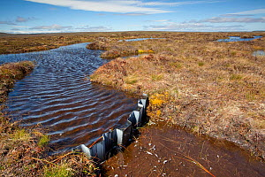 Dam in place to re-wet blanket bog at RSPB Forsinard Flows, Flow country, Caithness, Highland, Scotland, UK, June 2011  -  Peter Cairns / 2020VISION