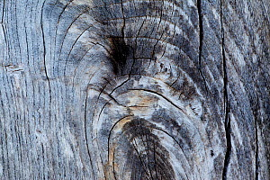 Patterns within weathered wood, Flow country, Forsinard, Caithness, Highland, Scotland, UK  -  Peter Cairns / 2020VISION