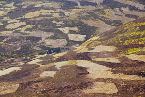 Patchwork of muirburn on moorland managed for grouse shooting, Cairngorms NP, Deeside, Scotland, UK, June 2011 - Peter Cairns / 2020VISION