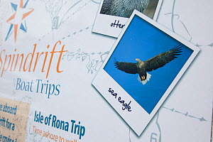 Tourist signs promoting boat trips and tourist exhibits based around the presence of White tailed sea eagles, Portree, Skye, Inner Hebrides, Scotland, UK, June 2011  -  Peter Cairns / 2020VISION