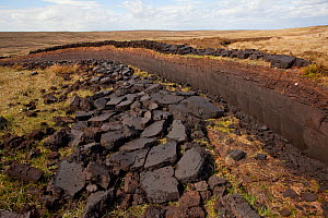 Community peat diggings, North Harris, Western Isles / Outer Hebrides, Scotland, UK, May 2011  -  Peter Cairns / 2020VISION