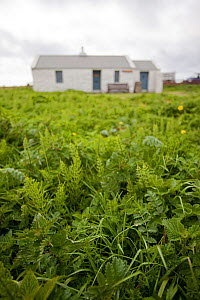 Management of habitat for waders and corncrake, RSPB Balranald reserve, North Uist, Western Isles / Outer Hebrides, Scotland, UK, May 2011  -  Peter Cairns / 2020VISION