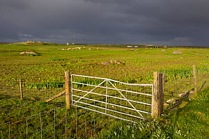 Gate and fence for management of habitat for waders and corncrake, RSPB Balranald reserve, North Uist, Western Isles / Outer Hebrides, Scotland, UK, May 2011  -  Peter Cairns / 2020VISION