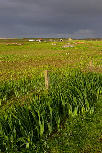 Fence for management of habitat for waders and corncrake, RSPB Balranald reserve, North Uist, Western Isles / Outer Hebrides, Scotland, UK, May 2011  -  Peter Cairns / 2020VISION