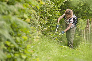 Volunteer, Aline Denton, cutting back brambles and blackthorn as part of the farm's conservation management, Denmark Farm, Lampeter, Wales, UK. June 2011. Model released. Did you know? Blackthorn is t... - Ross Hoddinott / 2020VISION