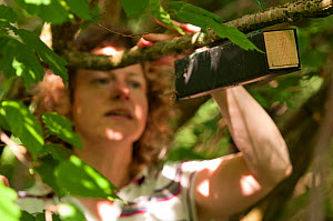 Volunteer, Aline Denton, checking dormice boxes for recent activity. Dormice have recently returned to the farm due to the traditional way the farm is now managed. Denmark Farm Conservation Centre, La... - Ross Hoddinott / 2020VISION