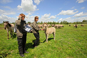 Konik horse (Equus caballus) Wicken Fen, Cambridgeshire, UK, June 2011. Grazing Warden Carol Laidlaw and Volunteer Maddy Downes conduct a daily behavioural study of the Konik herd. Model Released.  -  Terry Whittaker / 2020VISION