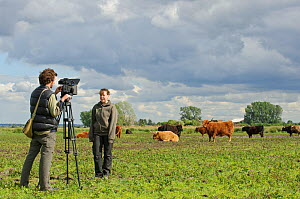 Highland cattle (Bos taurus) Wicken Fen, Cambridgeshire, UK, June 2011. Volunteer Maddy Downes who looks after Wicken Fen's Konik horses and Highland cattle being interviewed for 2020VISION by camerma... - Terry Whittaker / 2020VISION