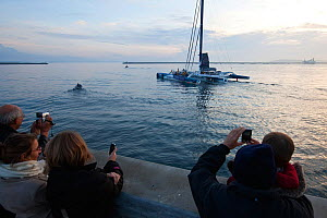 Spectators photographing maxi-trimaran 'Banque Populaire V' departing Brest on Jules Verne Trophy attempt, France, November 2011. All non-editorial uses must be cleared individually.  -  Benoit Stichelbaut