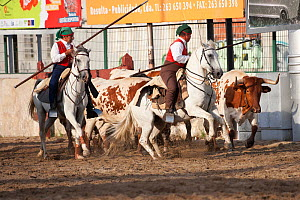 During the Festa do Colete Encarnado (Red Waistcoat Festival), a bull running festival, traditionally dressed cowboys, mounted on their horses, drive the bulls through the streets of Vila Franca de Xi...  -  Kristel Richard